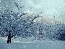winter-1861704_960_720 snow.jpg